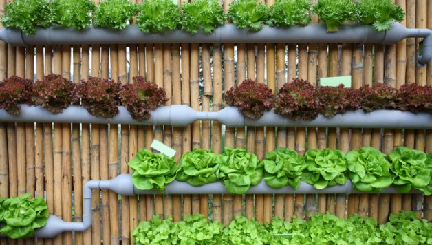 a description of growing plants and crops everyday of the year This brief walkthrough will help you through your first year by outlining which crops you should choose to plant and per plant, growing to year one.