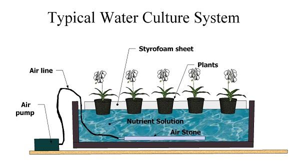 water-culture2