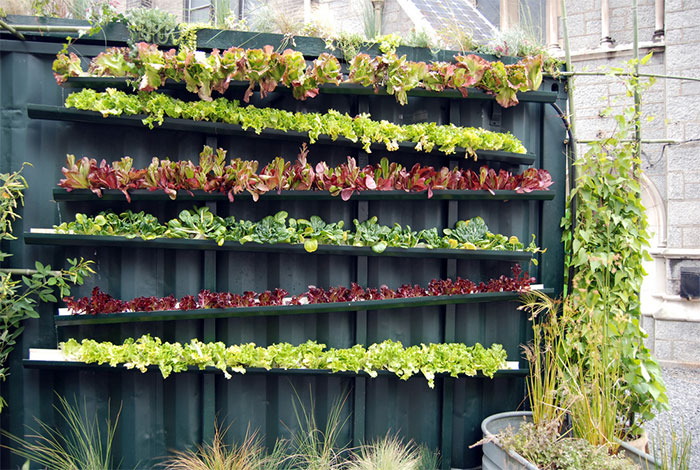 What Is Vertical Gardening 101 Grow Green Food