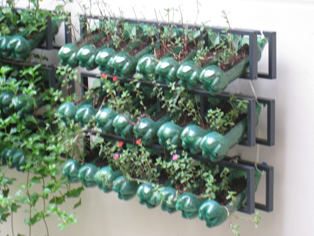 What Is Vertical Gardening? 101
