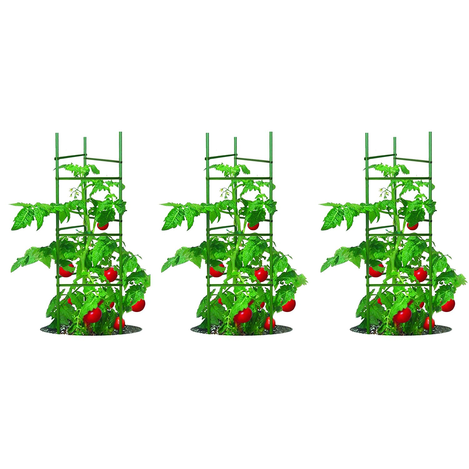 7 Best Tomato Plant Support Cages | Grow Green Food